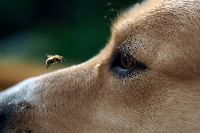 dog - bee